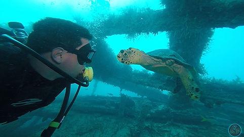 abrolhos.mergulho.tartaruga.jpg