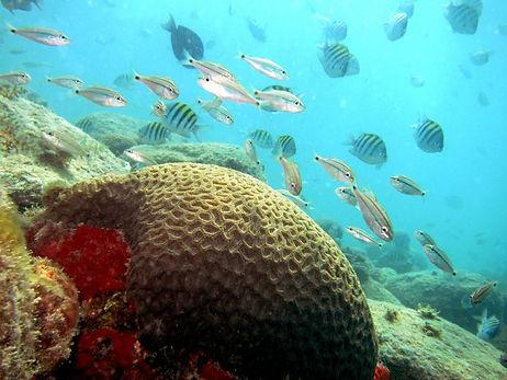 tr-arquipelogo-abrolhos-brasil-06-mergul