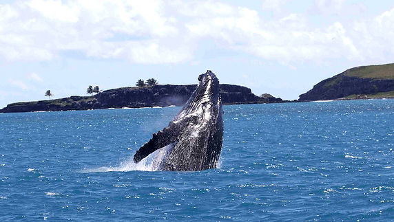 abrolhos.baleia jubarte (22).jpeg