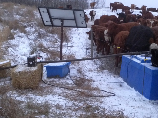 Water Quality on Pasture