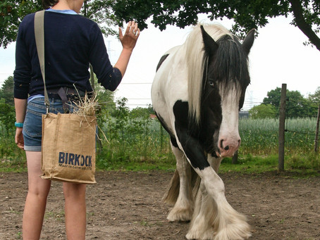 Therapie met paarden: het verhaal achter de magie