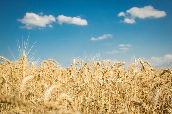 Index de Seceta, primul produs de asigurare pentru seceta din Romania aduce noi beneficii fermierilor in anul agricol 2021
