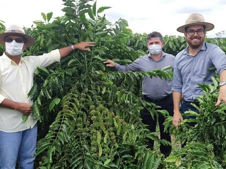 Novas Culturas - Sérgio Lopes visita Acrelândia para conhecer  técnicas de plantio de Café Clonal