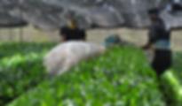 お茶_2018060614400887.PNG