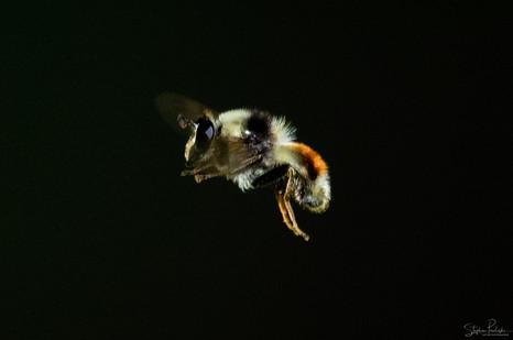 SPNP.CA - Nature - 0115 - 0114 focus mag