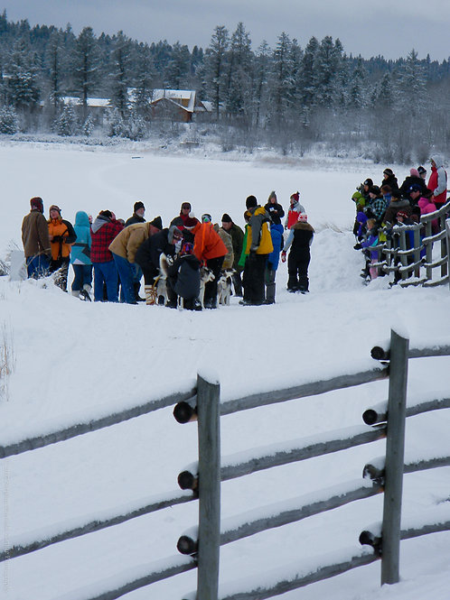 Welcoming The Sled Dogs