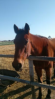 Sam close up horse.JPG