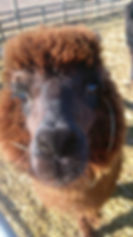 lama close up.jpg