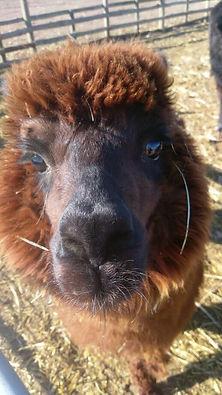 lama close up.jpg