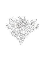 H2-SFAUR-algue.jpg