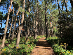 Path along Nagata beach close to the hou