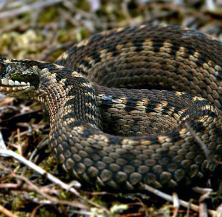 Active Adders!