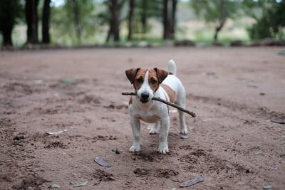 Sticks, wood you believe it?
