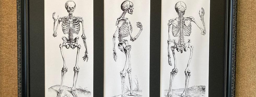 Three Skeletons (Hello, Walking, Goodby)