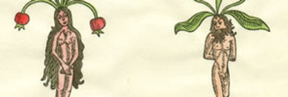 Mandrakes (Hand Colored)