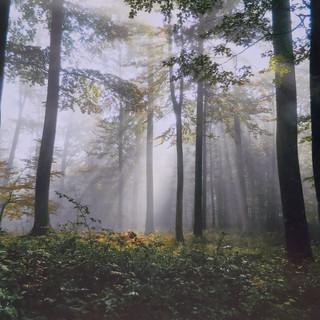 Gorše Marjeta Čarobno prebujanje gozda A