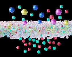 membrane_2