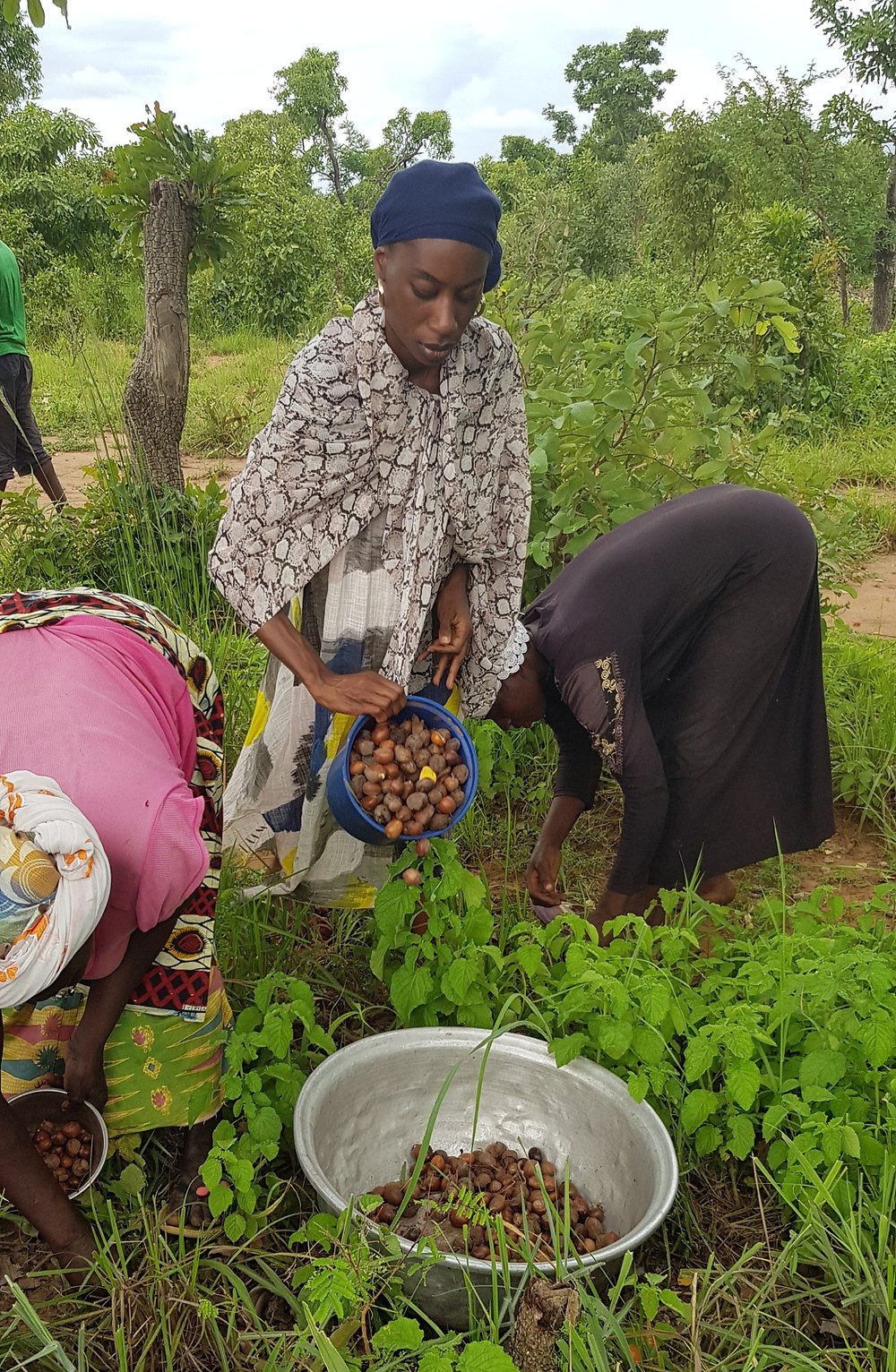 Maame Opoku picking shea nuts in the forest