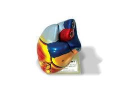 401D - Heart Model (3)