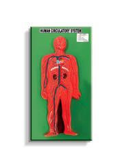 J401F - Circulatory System Model