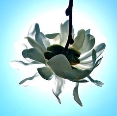 Flipped Flower