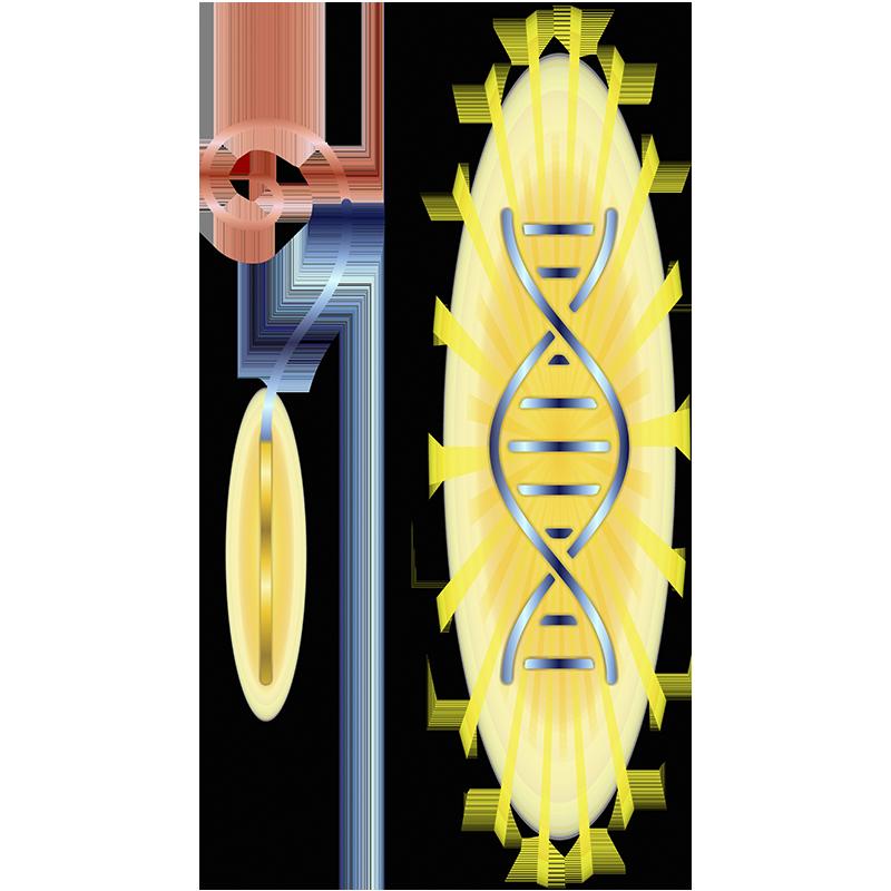 Atualização do DNA