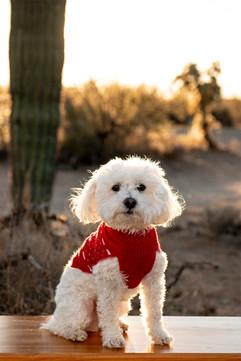 Tucson-Pet-portrait-photographer-gentle-