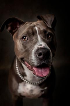 Tucson-Pet-Portraits-2.jpg