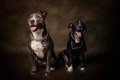 Tucson-Pets-Portraits-3.jpg