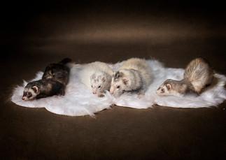 Tucson-Pets-Portraits.jpg