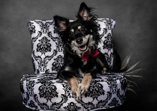 Tucson-Pet-Portrait-3.jpg