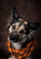 Tucson-Pet-Portrait-2.jpg
