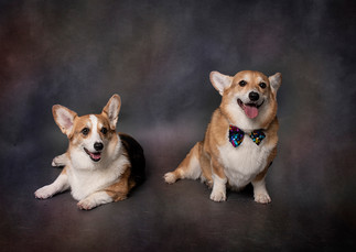 Tucson-Pets-Portraits-2.jpg
