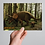 Thumbnail: Triceratops horridus Exclusive Print
