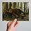 Thumbnail: Triceratops horridus Impresión Exclusiva