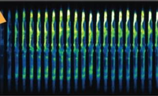 Understanding Ageing using Microfluidics
