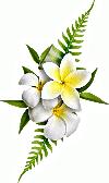 Fleur%20du%20tiare_edited.png