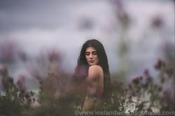 冰岛西岸,花语写真