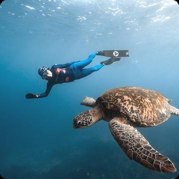 小琉球 與海龜共游