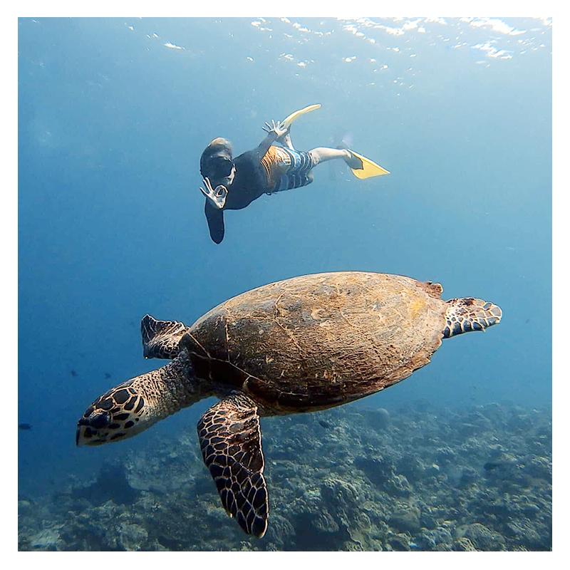 小琉球 與海龜共泳