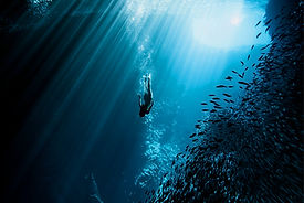 Everything-You-Need-to-Start-Free-Diving