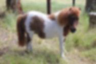 Adelaide Hills Pony Vet
