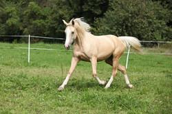 Adelaide Hills Equine Vet