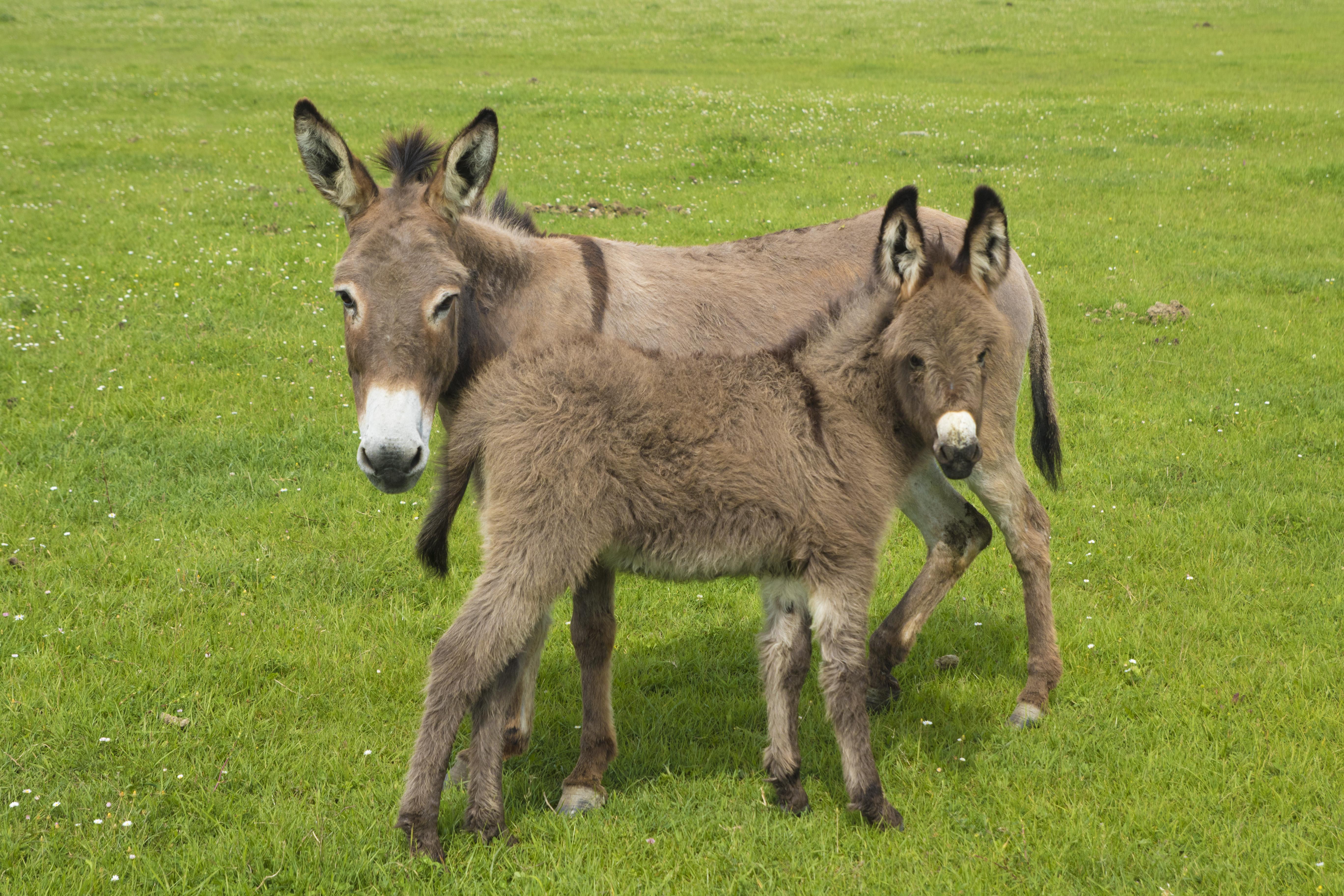 Adelaide Hills Donkey Vet