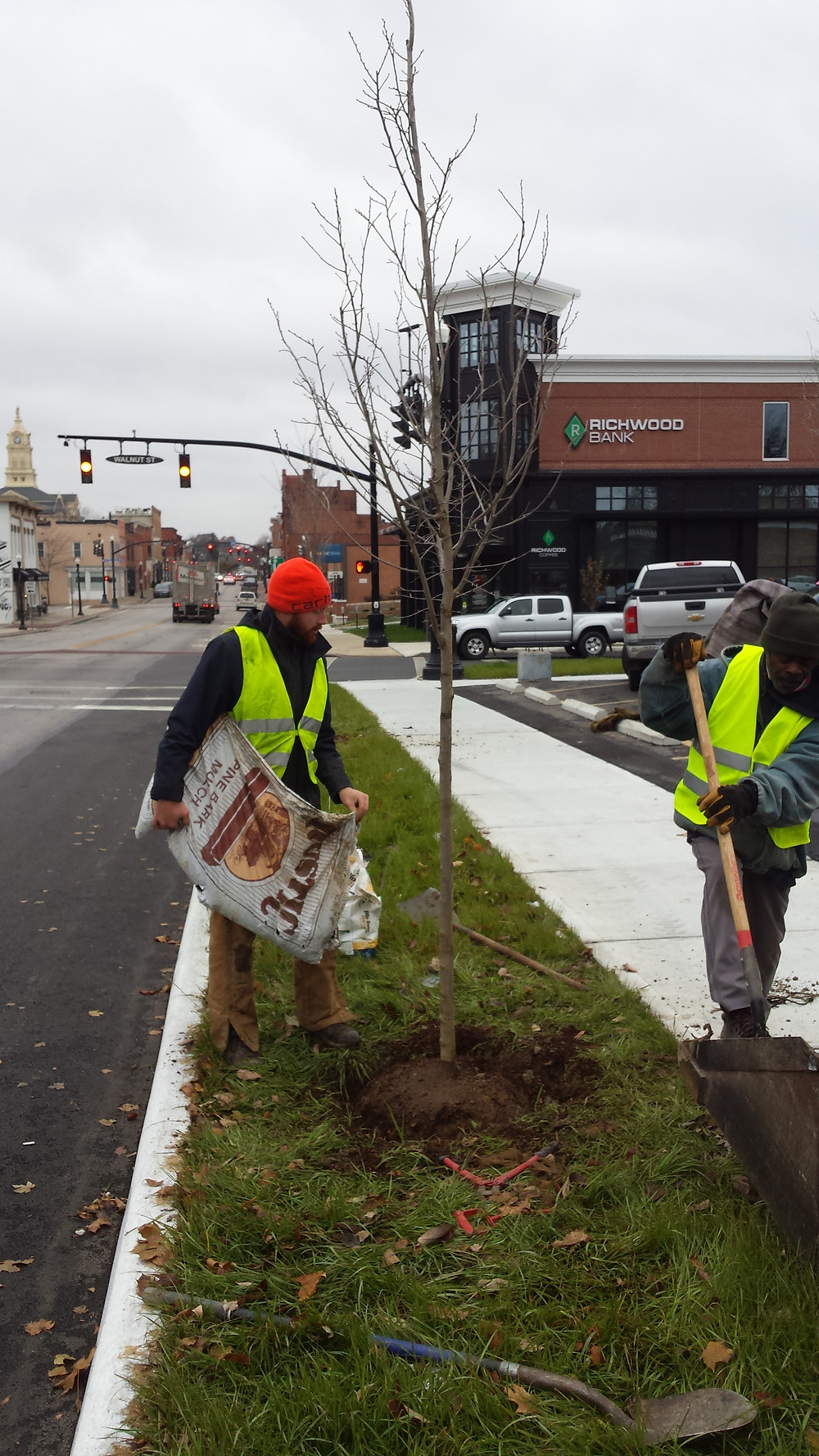 Planting a street tree on Walnut and 5th downtown!