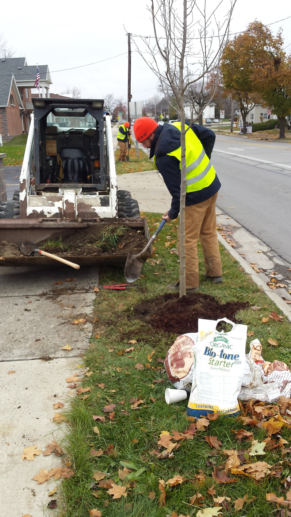 We planted seven Triumph Elms along 5th street