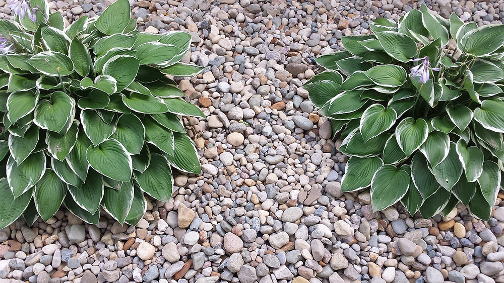 Decorative stones used as a mulch