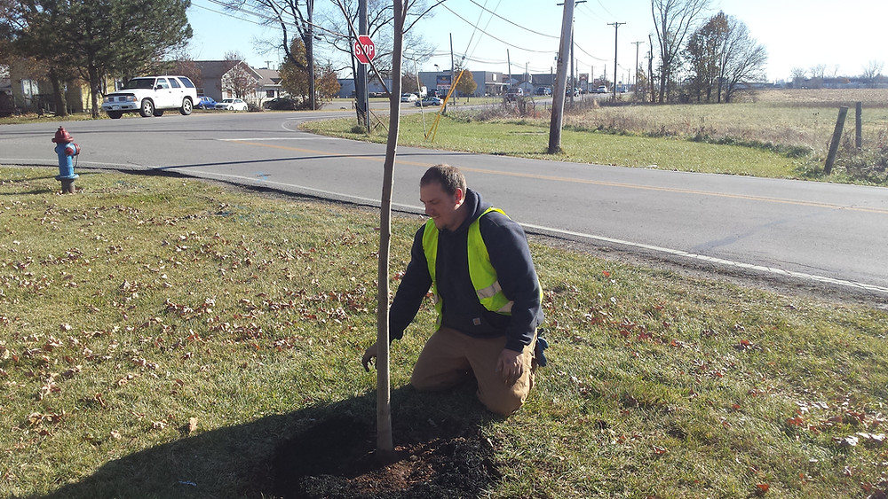 Planting a Tulip Poplar on Dunham Avenue