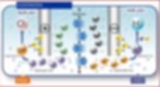 ВОПРОСЫ И ОТВЕТЫ КАНГЕН ВОДА_+7(926) 954-41-00_Ионизаторы Японии купить недорого в Москве_www.super-voda.com