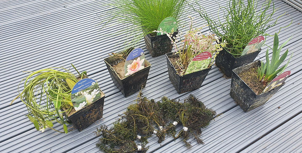 **PRE-ORDER** Plant Pack (inc Planters) Large [Mid March delivery]
